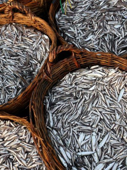 Baskets of Fish on Beach-Paul Kennedy-Photographic Print