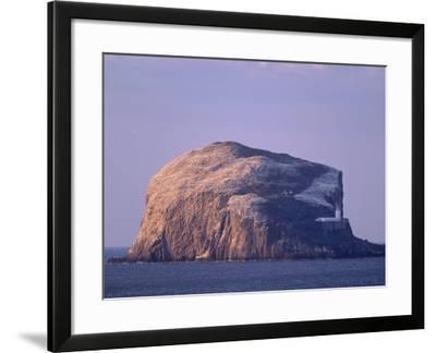 Bass Rock, Large Gannet Colony of around 80000 Nests, Near North Berwick, East Lothian, Scotland-Patrick Dieudonne-Framed Photographic Print