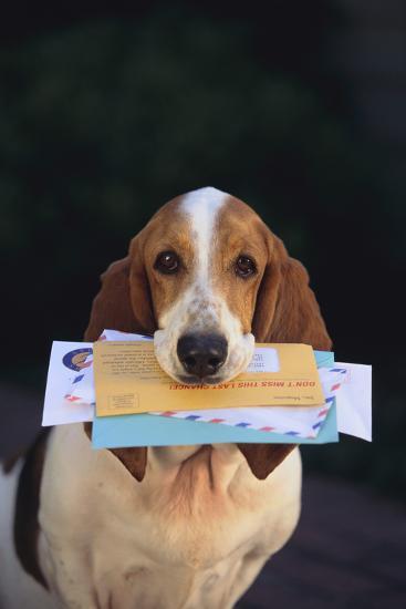 Basset Hound Fetching the Mail-DLILLC-Photographic Print