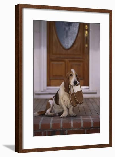 Basset Hound Waiting with Owner's Slippers-DLILLC-Framed Photographic Print