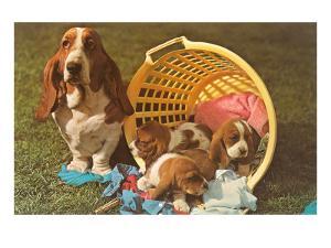 Bassett Hound Family in Laundry Basket