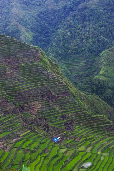 Batad Rice Terraces, Banaue, Luzon, Philippines-Michael Runkel-Photographic Print