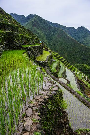Batad Rice Terraces, World Heritage Site, Banaue, Luzon, Philippines-Michael Runkel-Photographic Print