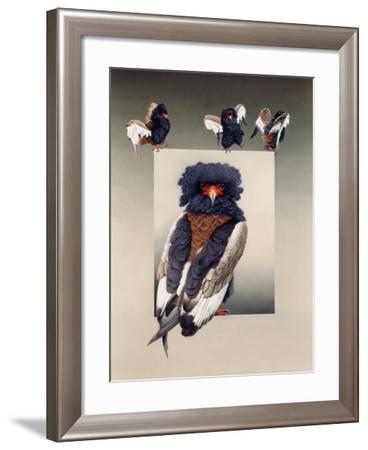 Bateleur (African Eagle)-Harro Maass-Framed Giclee Print