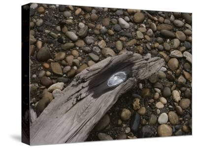 Driftwood on Pebbled Beach