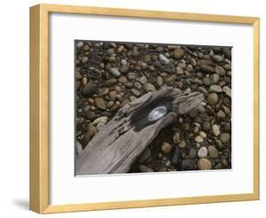 Driftwood on Pebbled Beach by Bates Littlehales