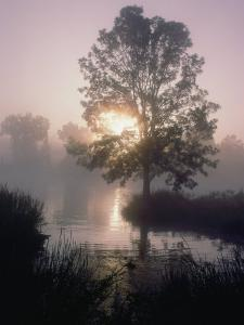 The Sun Shines Through Early-Morning Fog onto Water Bordered by Trees and High Grass by Bates Littlehales