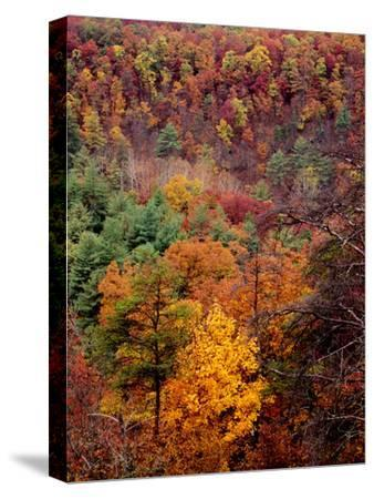 Trees in Autumn Hues on a Mountain Side