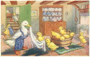 Bath Day for Ducklings