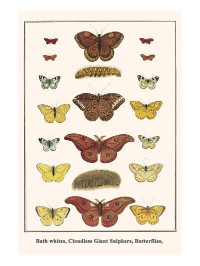 Bath Whites, Cloudless Giant Sulphers, Butterflies,-Albertus Seba-Art Print