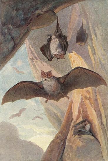 Bats in Cave--Art Print