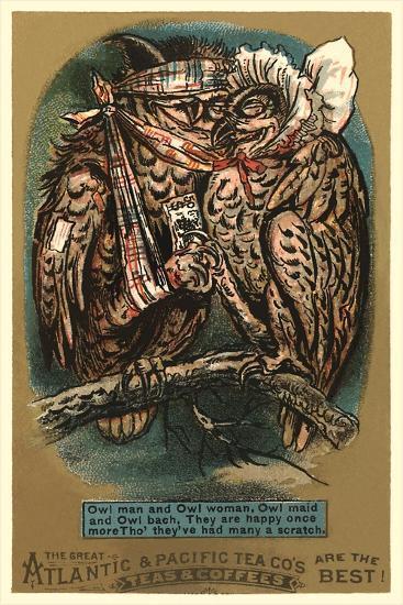 Battered Owl Couple--Art Print