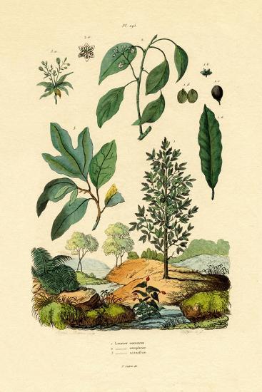 Bay Laurel, 1833-39--Giclee Print