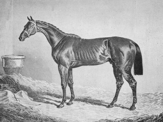 'Bay Middleton', 1833-1857, (1911)-Unknown-Giclee Print