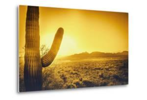 Epic Desert Sunset over Valley of the Sun, Phoenix, Scottsdale, Arizona with Saguaro Cactus in Fore by BCFC