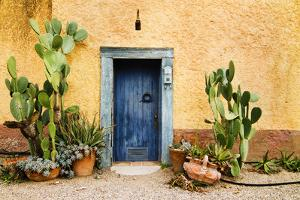 Old Doorway Surrounded by Cactus Plants and Stucco Wall. by BCFC