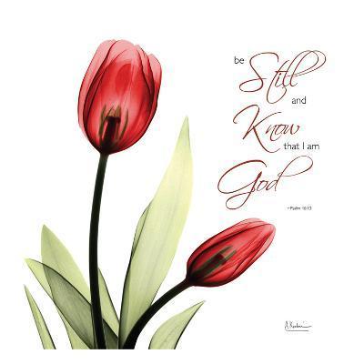 Be Still Tulip-Albert Koetsier-Art Print