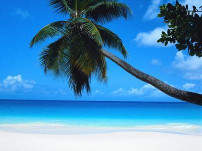 Beach and Palm, Seychelles Island