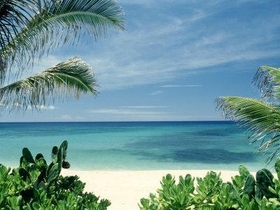 https://imgc.artprintimages.com/img/print/beach-and-palm-trees-oahu-hi_u-l-pxz1to0.jpg?p=0