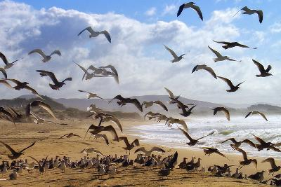 Beach Birds, Half Moon Bay, California Coast-Vincent James-Photographic Print