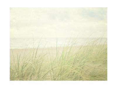 https://imgc.artprintimages.com/img/print/beach-grass-ii_u-l-pwbopk0.jpg?p=0