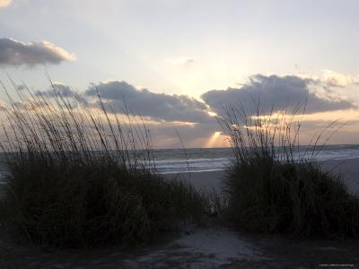 Beach Grass on Anna Maria Island, Holmes Beach, Florida-Stacy Gold-Photographic Print