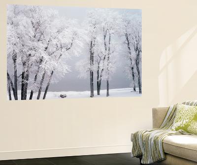 Beach, Hoar Frost on Cottonwoods During Winter, Bear Lake, Rendezvous, Utah, USA-Scott T^ Smith-Giant Art Print