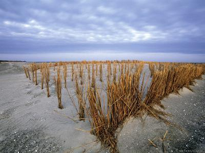 Beach in the Early Morning, Darss, Mecklenburg-Vorpommern, Germany-Thorsten Milse-Photographic Print