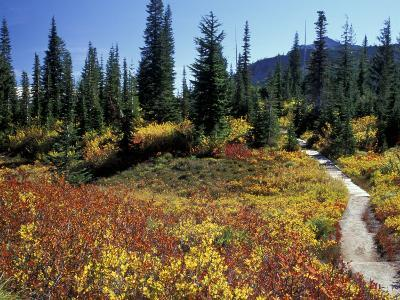 Beach Lake Trail with Fall Color, Mt. Rainier National Park, Washington, USA-Jamie & Judy Wild-Photographic Print