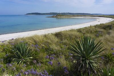 Beach on Tresco Island, Scilly Isles, United Kingdom, Europe-Peter Groenendijk-Photographic Print