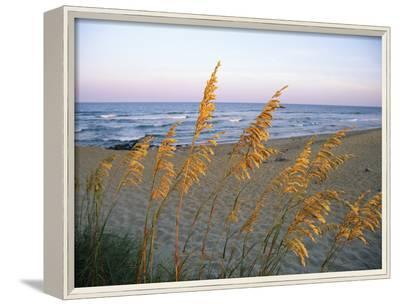 Beach Scene with Sea Oats-Steve Winter-Framed Photographic Print