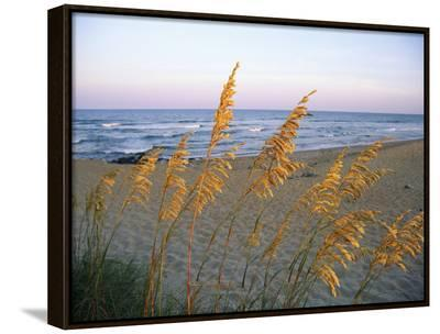 Beach Scene with Sea Oats-Steve Winter-Framed Canvas Print