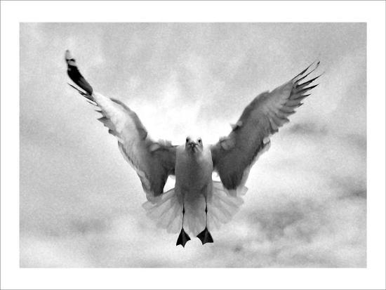 Beach Seagull Landing-Stephen Lebovits-Giclee Print