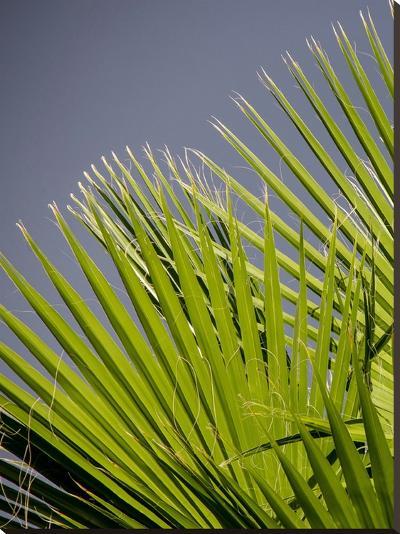 Beach Style Palm Leaf-Wonderful Dream-Stretched Canvas Print
