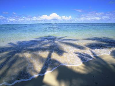 Beach with palm shadow-Douglas Peebles-Photographic Print