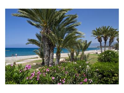 Beach with Palm Trees near the Town of Lachi on Akamas Peninsula, South of Cyprus, Cyprus--Art Print