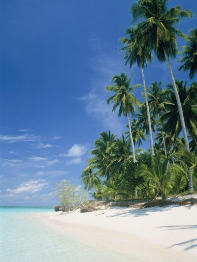 Beach with palms and clear sea, Malaysia, Mabul Island-Sergio Pitamitz-Photographic Print
