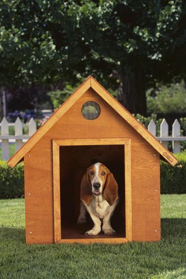Beagle-DLILLC-Photographic Print