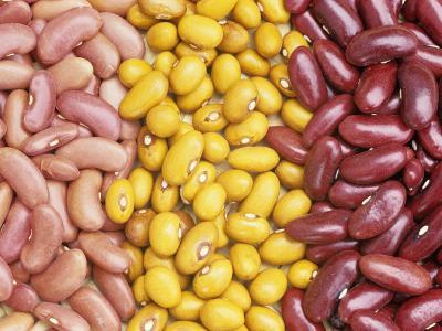 Bean Varieties: Left- Red Kidney, Center- Marfax, Right- Canada Red-David Cavagnaro-Photographic Print