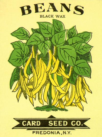 Beans Seed Packet--Giclee Print