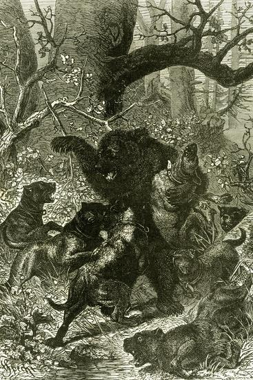 Bear Hunt 1891 Russia--Giclee Print