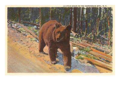 Bear in the Adirondack, New York--Art Print