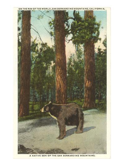 Bear, San Bernardino Mountains, California--Art Print
