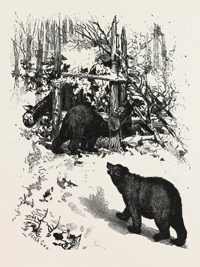 Bear Trap, Canada, Nineteenth Century--Giclee Print