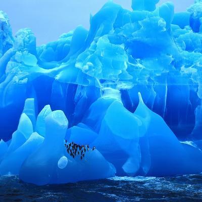 Bearded Penguin, Chinstrap Penguin (Pygoscelis Antarctica, Pygoscelis Antarcticus), Antarctica- Blickwinkel-Photographic Print