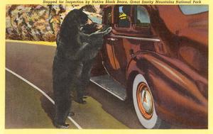 Bears at Car, Smoky Mountains, North Carolina