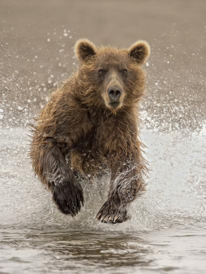 Bears at Play II-PHBurchett-Art Print