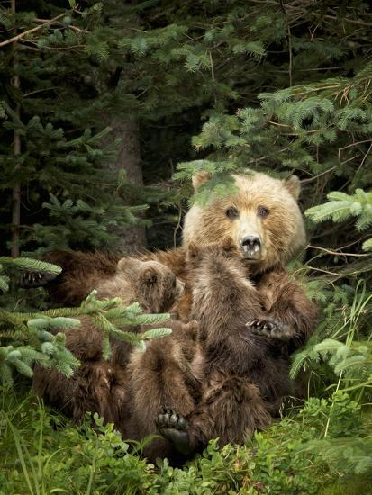 Bears at Play IV-PHBurchett-Art Print