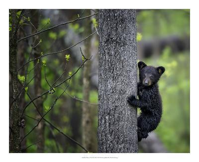 Bears at Play VI-PHBurchett-Art Print