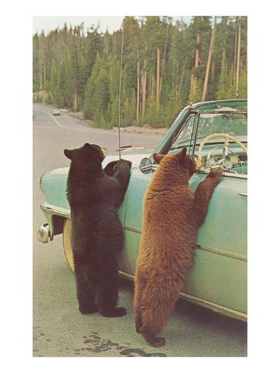 Bears Begging at Side of Car--Art Print